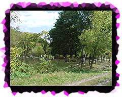 Dravo Cemetery from the Yough Bike Trail.