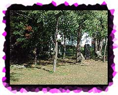 The Walker Family graves shaded by the trees.